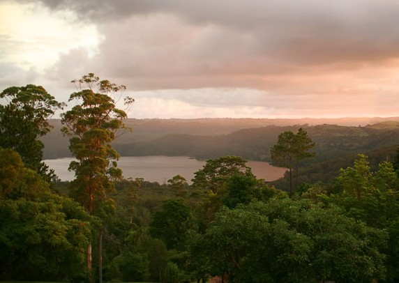 Montville Misty View Cabins - Accommodation Cooktown