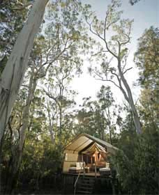 Paperbark Camp - Accommodation Cooktown