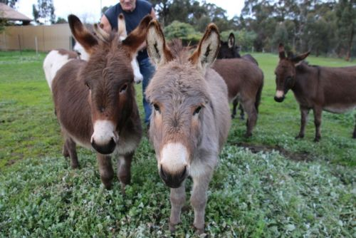 Donkey Tales Farm Cottages - Accommodation Cooktown