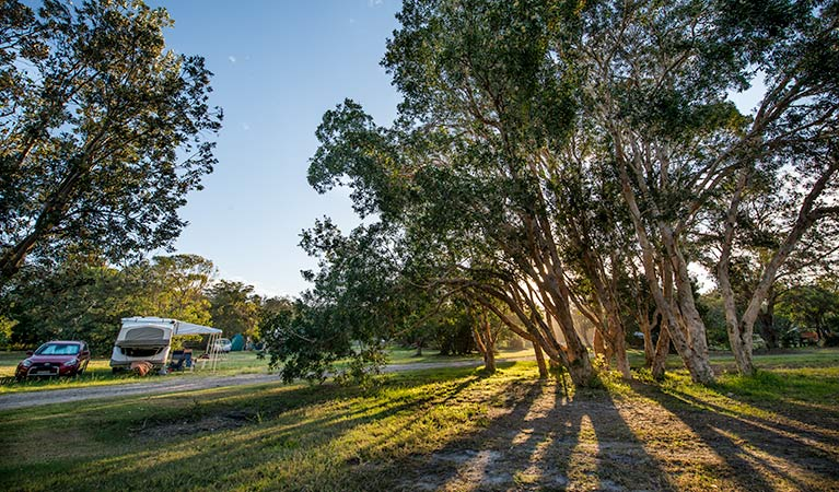 Delicate campground - Accommodation Cooktown