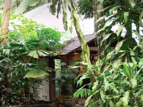 Heritage Lodge and Spa - In the Daintree - Accommodation Cooktown