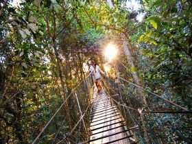 O'Reilly's Rainforest Retreat - Accommodation Cooktown
