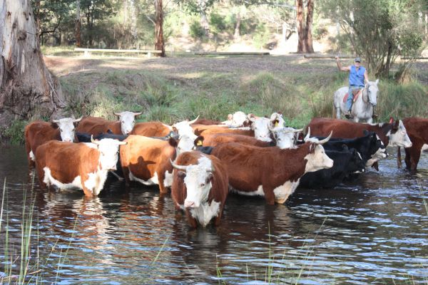 Stockyard Creek - Accommodation Cooktown