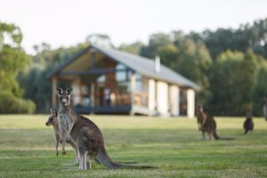 Yering Gorge Cottages - Accommodation Cooktown