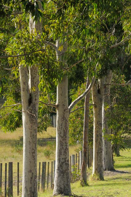 Stringybark Cottages - Accommodation Cooktown