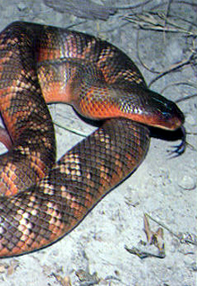Armadale Reptile  Wildlife Centre - Accommodation Cooktown