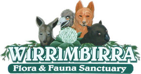 Wirrimbirra Sanctuary - Accommodation Cooktown
