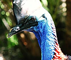 Alma Park Zoo - Accommodation Cooktown