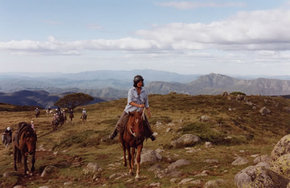 High Country Horses - Accommodation Cooktown
