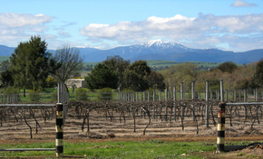 Buller View Wines - Accommodation Cooktown