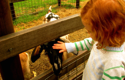Collingwood Children's Farm - Accommodation Cooktown