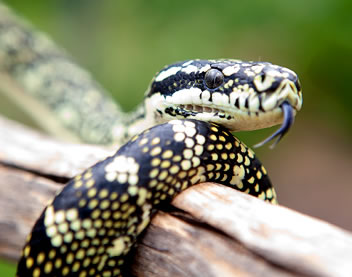 Reptile Encounters - Accommodation Cooktown