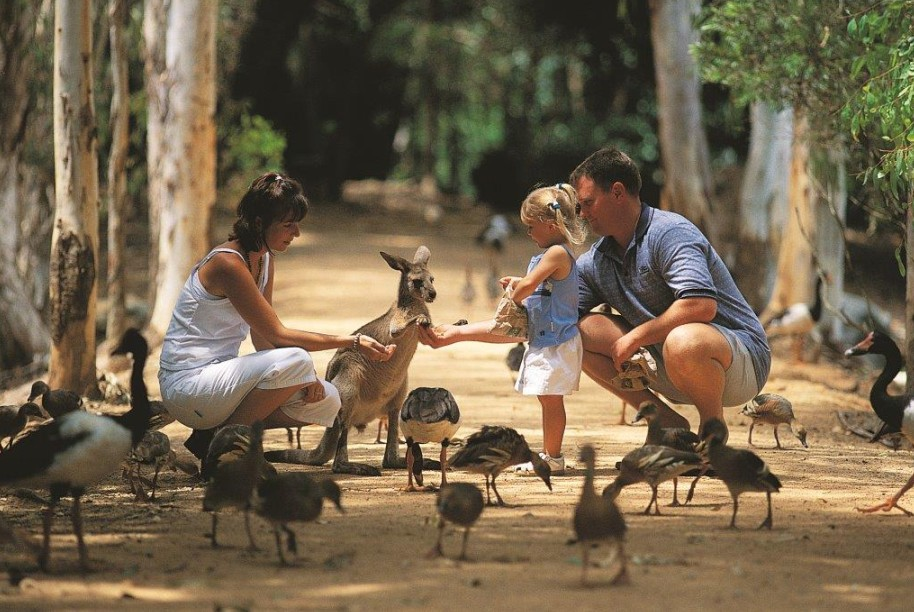 Billabong Sanctuary - Accommodation Cooktown
