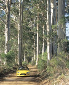 Mount Shadforth Scenic Drive - Accommodation Cooktown