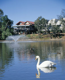 White Swans - Accommodation Cooktown