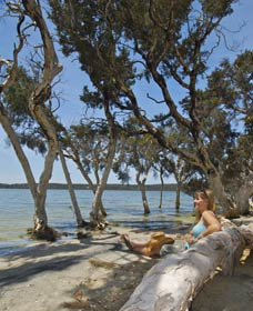 Stokes National Park - Accommodation Cooktown