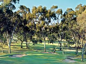 Tanunda Pines Golf Club - Accommodation Cooktown