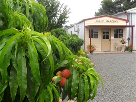 Gully Gardens - Accommodation Cooktown