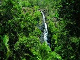 Kondalilla National Park - Accommodation Cooktown