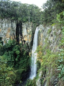 Gondwana Rainforests of Australia - Accommodation Cooktown