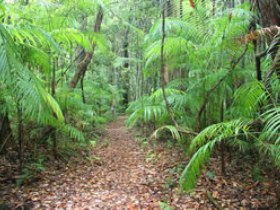 Delicia Road Conservation Park - Accommodation Cooktown