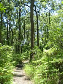 Mapleton Falls National Park - Accommodation Cooktown