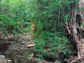 Mudlo National Park - Accommodation Cooktown