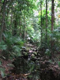 Mossman Gorge Rainforest Circuit Track Daintree National Park - Accommodation Cooktown