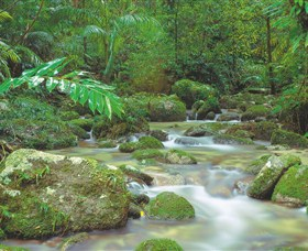 Mossman Gorge Daintree National Park - Accommodation Cooktown