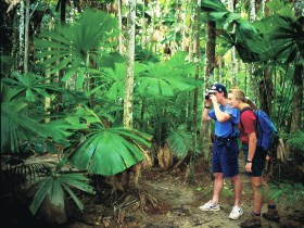 Mount Sorrow Ridge Trail Daintree National Park - Accommodation Cooktown