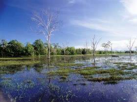Tyto Wetlands - Accommodation Cooktown