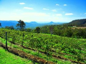 Preston Peak Wines - Accommodation Cooktown