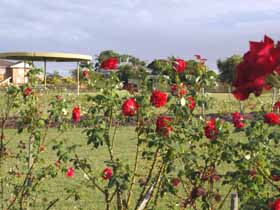 Elizabeth Park Rose Gardens - Accommodation Cooktown