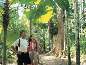Licuala State Forest - Accommodation Cooktown