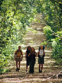 Wet Tropics Great Walk - Accommodation Cooktown