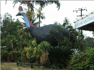 The Big Cassowary - Accommodation Cooktown