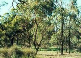 Leaghur State Park - Accommodation Cooktown