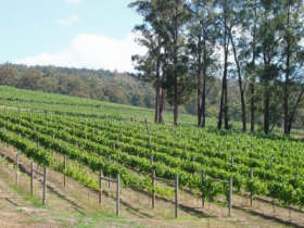Piedmont Vineyard - Accommodation Cooktown