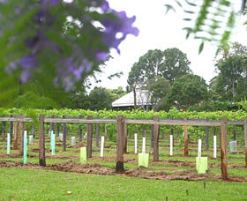 Douglas Vale Historic Homestead  Vineyard - Accommodation Cooktown