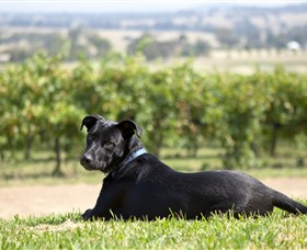 Moothi Estate Vineyard and Cellar Door - Accommodation Cooktown