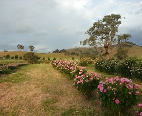 Damasque Rose Oil Farm - Accommodation Cooktown