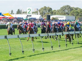 Morphettville Racecourse - Accommodation Cooktown