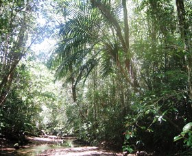 Mount Lewis National Park - Accommodation Cooktown