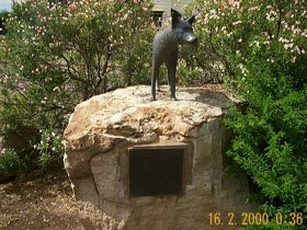 Dingo Statue - Accommodation Cooktown