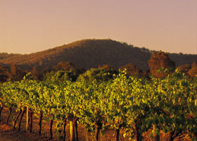 Taltarni Vineyards - Accommodation Cooktown