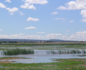 Fivebough Wetlands - Accommodation Cooktown