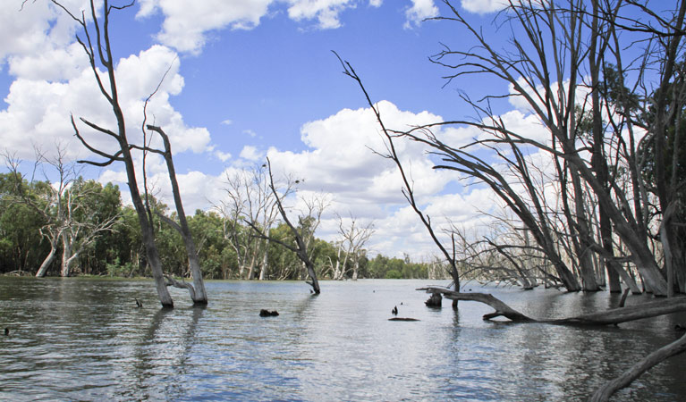 Murrumbidgee Valley National Park - Accommodation Cooktown