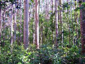 Cathu State Forest - Accommodation Cooktown
