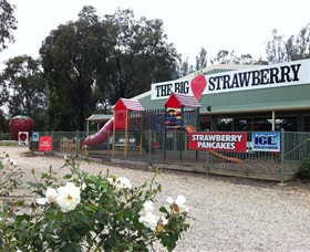 The Big Strawberry - Accommodation Cooktown