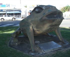 Big Cane Toad - Accommodation Cooktown